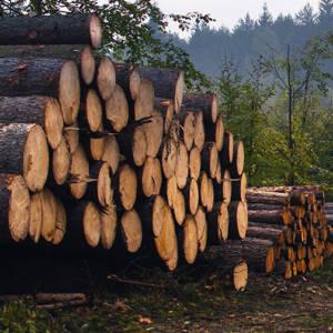vendita legna da ardere catania