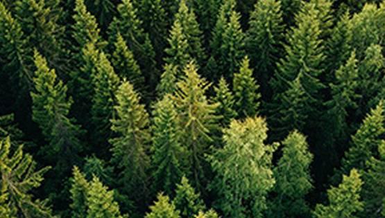 In Italia i boschi sono in aumento